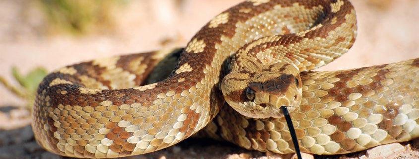 Expert witness golf rattlesnakes wildlife bite injury
